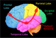 Learn more about the Brain Portfolio Tool at www.brainwealth.org