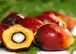 Red Palm Oil | Palm Oil for Weight Loss