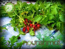 The Nourishmat: Gardening Innovation