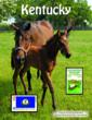 For this Free downloadable Kentucky Stamp Album, visit www.stamps.org/Free-Album-Pages.