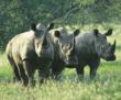 Goway Partners With Wildlands Conservation Trust to Protect Rhinos in...