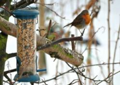 Attracting winter wildlife