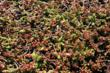 Xero Flor Plants for the Javits Center Green Roof