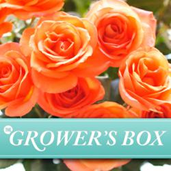 wholesale flowers, wedding flowers, online wholesale flowers, bulk flowers, DIY wedding flowers