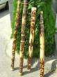 wholesale rainsticks, rain makers, didgeridoos, drums & percussion