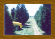 Watterson wholesale tree nursery this pic is the original Leyland Cypress farm.