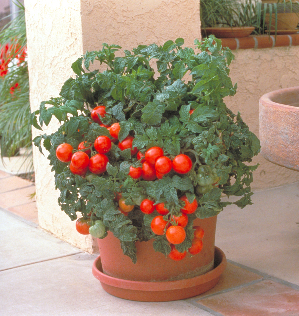 Soil For Tomatoes: Seminis Home Garden Offers Container Gardeners Expanded
