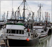 A fleet of fishing boats