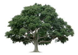 Tree Care Service in Boulder County and Longmont, Colorado