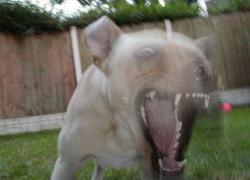 a dog attacks a toddler resulting in death in TX.
