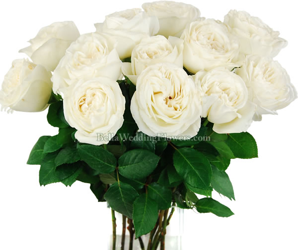 jeanne moreau white garden rosestop 3 most popular garden rose varieties