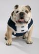 Butler University Mascot Blue II to Retire