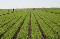 Agricultural Research @ ScienceAlerts.com
