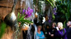 Cleveland Botanical Garden 10th Annual Orchid Mania