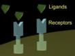 Cell Receptor @ TriScience.com