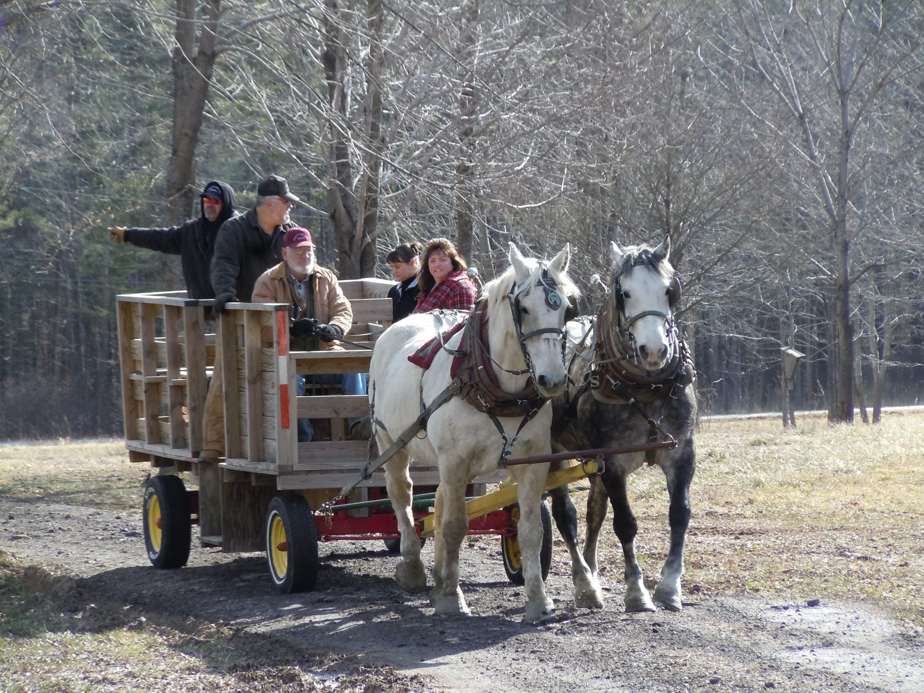 Horse Drawn Wagon Horse Drawn Wagon Tours