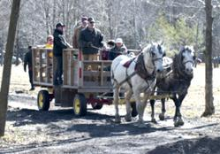 Photo of The Maple Madness Driving Tour stop at Bissell Maple Farm offers free pancakes, horse-drawn wagon tours of the maple farm and entertainment