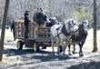 Bissell Maple Farm Offers Horse-drawn Wagon Tours as part of March...