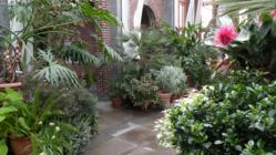 Flowering plants thrive in Tower Hill's 18th-century style Orangerie.