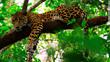 "Chaa Creek Celebrates Belize's New ""Historic"" Tourism Figures"