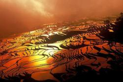 Yuanyang Rice Terraces - Yunnan