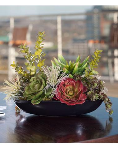 Sensational succulents expand at for Garden arrangement of plants