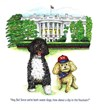Bo and Wilson at the White House