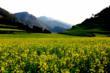 Luoping Larmlands - Yunnan