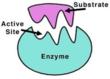 Enzyme @ Scien.net