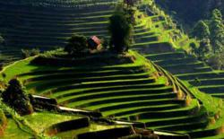 yuanyang-Rice-Terrace