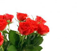 Flower Delivery Best Discounts