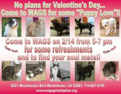 WAGS Valentine's Day pet adoption event