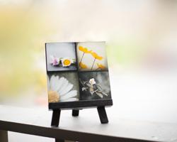 Black, Grey & Yellow, Modern Flower Photography Set by Maleah Torney Photography
