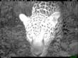 Tropical Forest Health in Focus:  World's Largest Camera Trap Study Reports 1,000,000th Photo