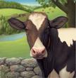 Connecticut milk