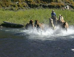 Each morning the wranglers bring in the herd at Rainbow Trout Ranch