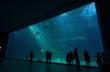 The relative size of the largest aquarium in South Korea, pictured here at the grand opening of AquaPlanet Jeju, is evident as admirers enjoy the exhibit.