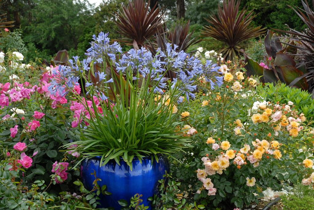 Tesselaar plants suggests gardeners super size their containers this year - Easy gardening ...