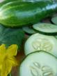 Organic Cucumbers are one of the top 10 easiest vegetables to grow from seed