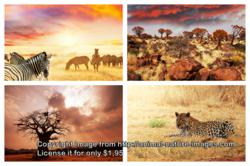 Safari Image from Nature and Animal Images