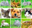 Cat and Dog Images from Nature Animal Images