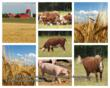 Farm Animals from Animal Nature Images