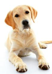 Dog Eating healthy food from petencare