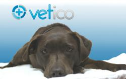 Vetico, the Veterinary information community for pet owners.
