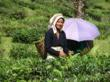 tea estate darjeeling india tibet organic biodynamic