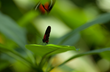 Meijer Gardens' Butterfly Exhibition Highlights Tropical Butterflies...