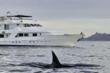 Safari Quest, Wilderness Explorer, Alaska Adventures, Small ship cruises