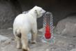 Denver Zoo Asks Public to Bundle up for Polar Bears