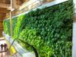 GSky Green Wall