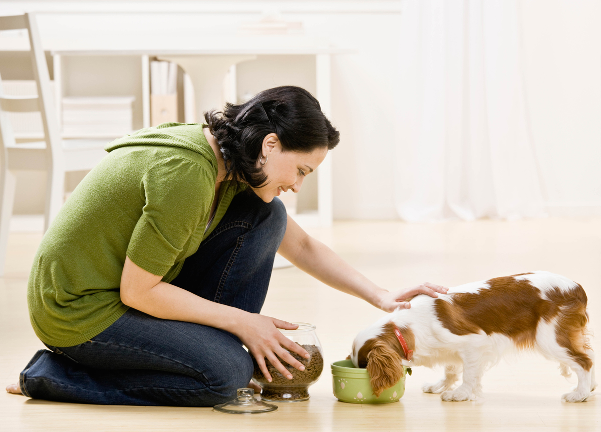 Pet sitters international now accepting nominations for for Puppy dog sitter